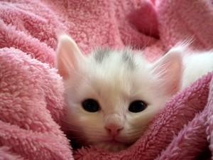 geschenke für katznefreunde 3