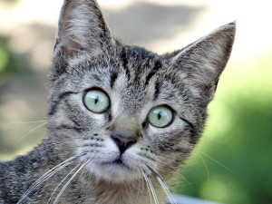 geschenke für katzenfreunde 5
