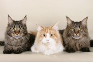 geschenke für katzenfreunde 9